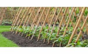 10 Броя Бамбукови Колове Bamboo