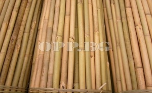100 Броя Бамбукови Колове Bamboo