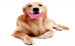 Гумена Дентална Играчка за Кучета Кокал