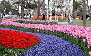 Екскурзия за Фестивалa на Лалето в <em>Истанбул</em>! Транспорт + 3 Нощувки на човек със Закуски + Посещение на Одрин от Абв Травелс