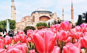 Екскурзия за Фестивала на Лалето в Истанбул, Турция! Транспорт + 3 Нощувки на човек със Закуски от Та Трипс Ту Гоу. Тръгване Всеки Четвъртък през Април