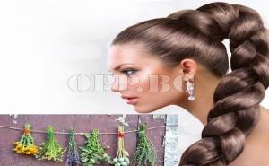 За Здрава и Красива Коса! Семена Билки за Укрепване на Косата