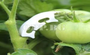 100 Броя Поддържащи Скоби за Домати и Пълзящи Растения