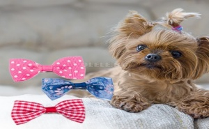 Комплект 3 Броя Фибички Папийонки за Кучета