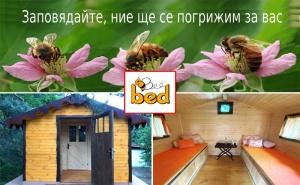Посещение на Пчелна Къща Bee Bed – Инхалация с Прополис, Кошерен Въздух или Почивка в Пчелна Стая по Избор