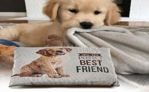 Мека Кучешка Възглавница Dogs Are The Perfect Best Friends