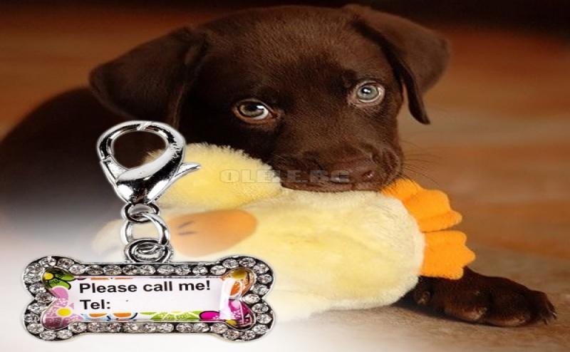 Кучешки Медальон Табелка Кокал