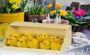 Комплект 10 Броя Мини Декоративни Великденски Пиленца