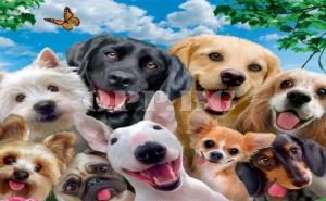 Страхотен Пъзел Кучета от 1000 Елемента